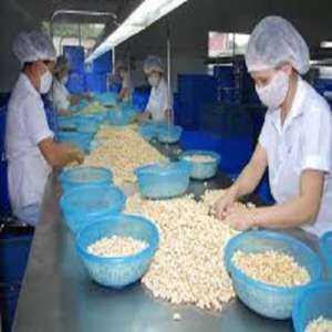 Création d'un modèle de plan d'entreprise par une entreprise d'exportation de noix de cajou