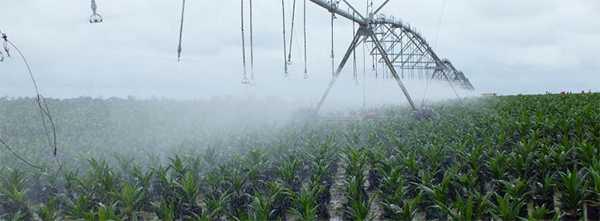 Création d'un modèle de plan d'entreprise type pour la plantation de palmiers à huile
