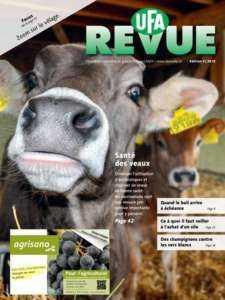 Démarrage de votre ferme d'autruche - Modèle de plan d'affaires