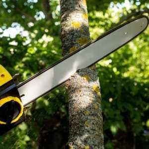 Démarrage d'une entreprise de suppression d'arbres