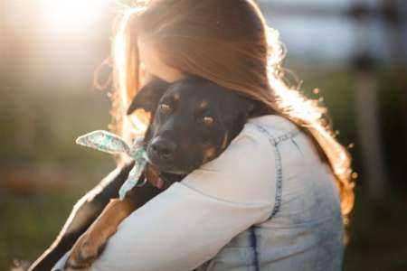 Démarrer une entreprise de friandises pour chiens à la maison