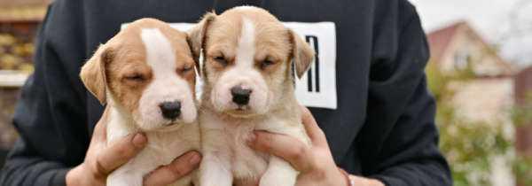 Démarrer une entreprise d'élevage de chiens à domicile