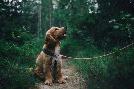 Lancer une entreprise de promenade de chien comme un enfant